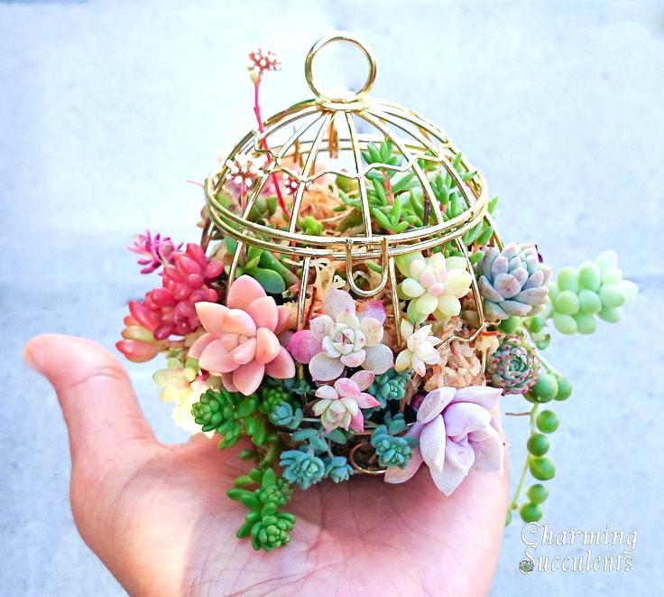 12 Ideas For Quirky Plant Containers To Jazz Up Your Garden: 12 Fun & Quirky Ideas For Succulents